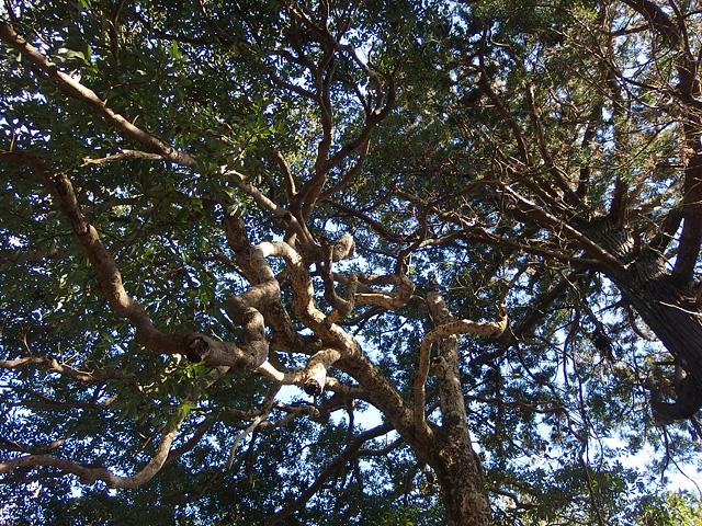 ついに猿田神社へ。森の力と、独特で不思議な世界・・・ (2/11)_b0006870_7422760.jpg