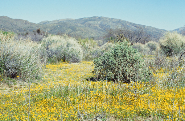 砂漠の春_e0167571_1142487.jpg