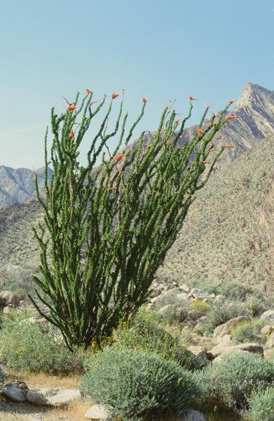 砂漠の春_e0167571_114391.jpg