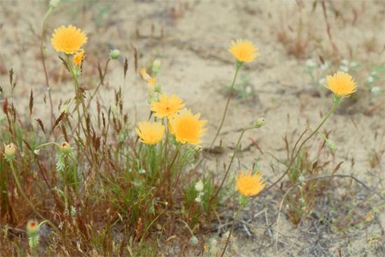 砂漠の春_e0167571_11441722.jpg
