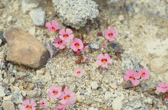 砂漠の春_e0167571_1146113.jpg