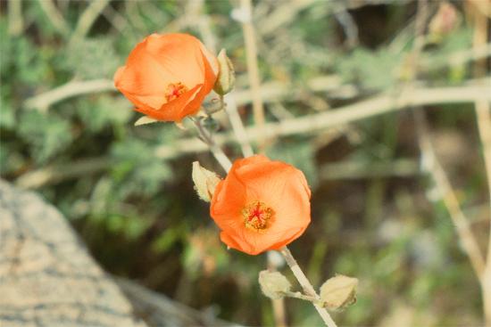 砂漠の春_e0167571_11461373.jpg