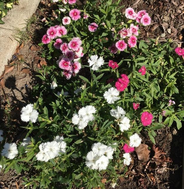 2月の庭-やっと庭仕事を始める_e0350971_11335787.jpg