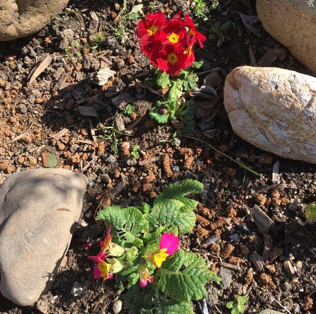 2月の庭-やっと庭仕事を始める_e0350971_11340692.jpg