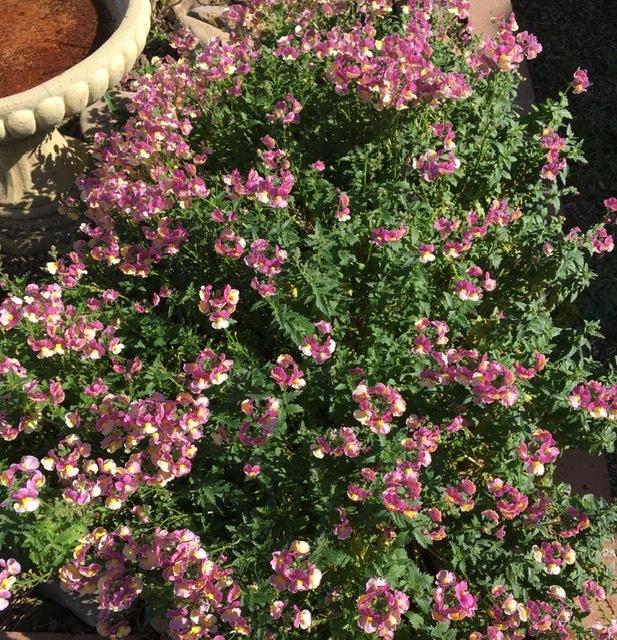 2月の庭-やっと庭仕事を始める_e0350971_11341229.jpg