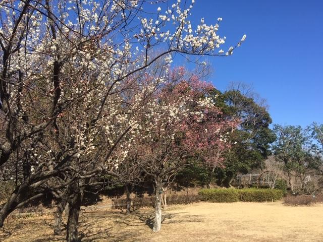 2月16日(日):春の足音_b0231588_17260812.jpg
