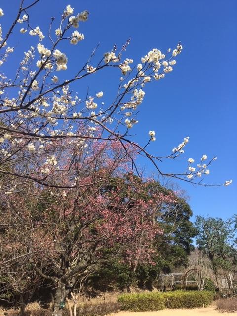 2月16日(日):春の足音_b0231588_17261024.jpg