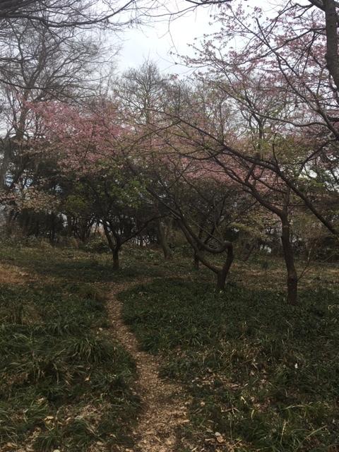 2月16日(日):春の足音_b0231588_17261371.jpg