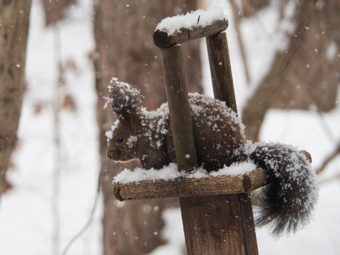 今度は大雪かな?雪に埋もれてしまうよ・・エゾリス君!_f0276498_20060855.jpg