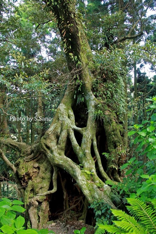 ミクラミヤマクワガタと神山の結界_b0348205_11115289.jpg