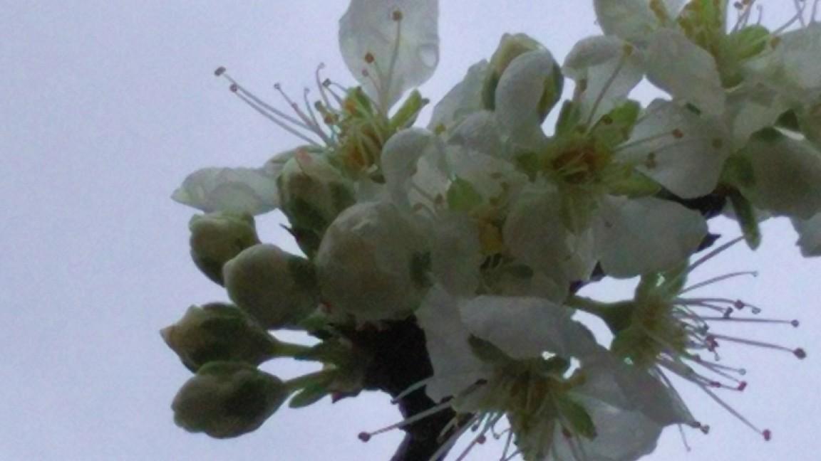 2月17日 大風と雨のなか。_a0204408_10404366.jpg