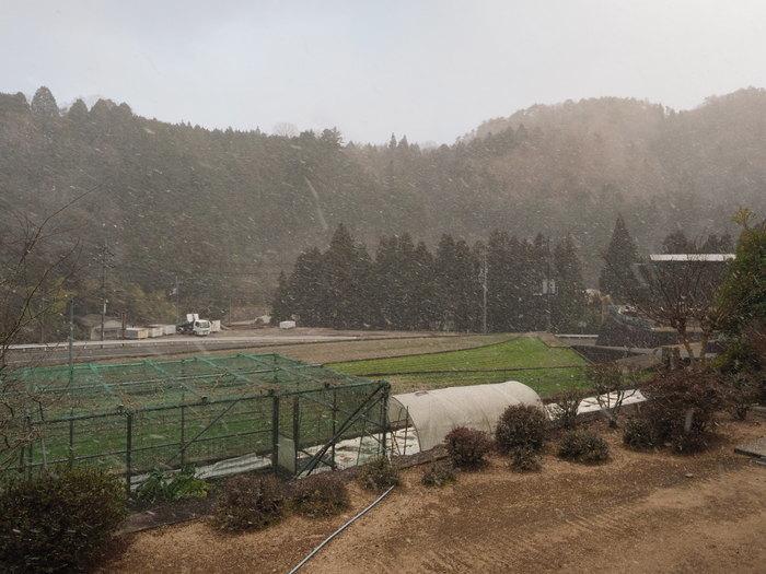 雪が降る_c0116915_23083836.jpg