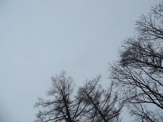 雪が降る前兆のよう、重たい空_b0405523_10591740.jpg