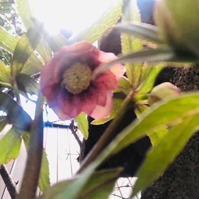 好きなお花は何ですか?~サプライズなプレゼント_e0128024_11080070.jpg