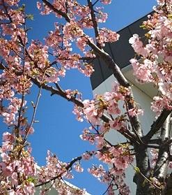 暖かくて桜満開!_e0294828_18234232.jpg