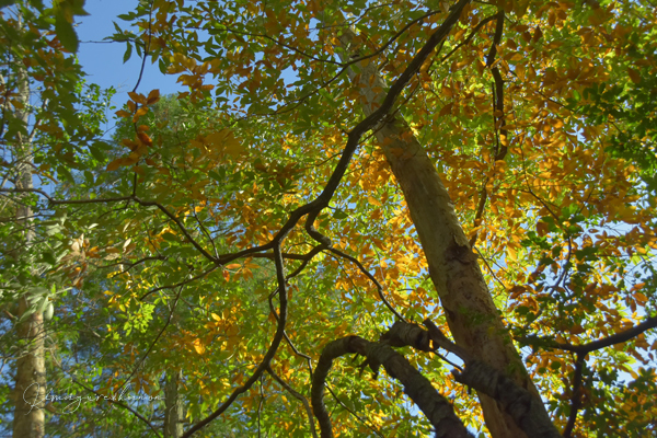 2019・11月の山活⑩**灯台下暗し~天神嶽_b0197639_19582956.jpg