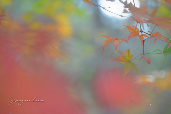 里山の秋**天神嶽、番外編_b0197639_22452949.jpg