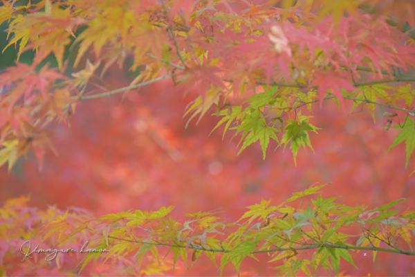 里山の秋**天神嶽、番外編_b0197639_22573020.jpg