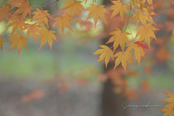 里山の秋**天神嶽、番外編_b0197639_23015037.jpg