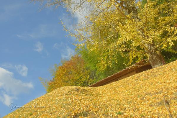 里山の秋**天神嶽、番外編_b0197639_23060233.jpg