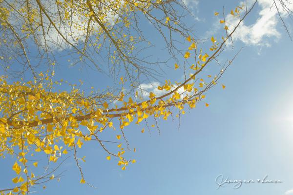 里山の秋**天神嶽、番外編_b0197639_23081310.jpg