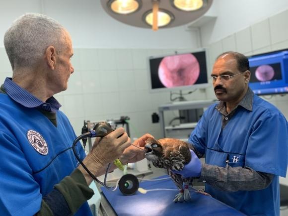 Dubai Falcon Hospital 獣医研修  1日目 (ドバイ ハヤブサ専門病院研修)_c0132048_09442397.jpeg