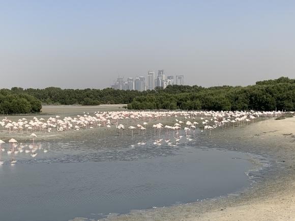 Dubai Falcon Hospital 獣医研修  1日目 (ドバイ ハヤブサ専門病院研修)_c0132048_09463569.jpeg