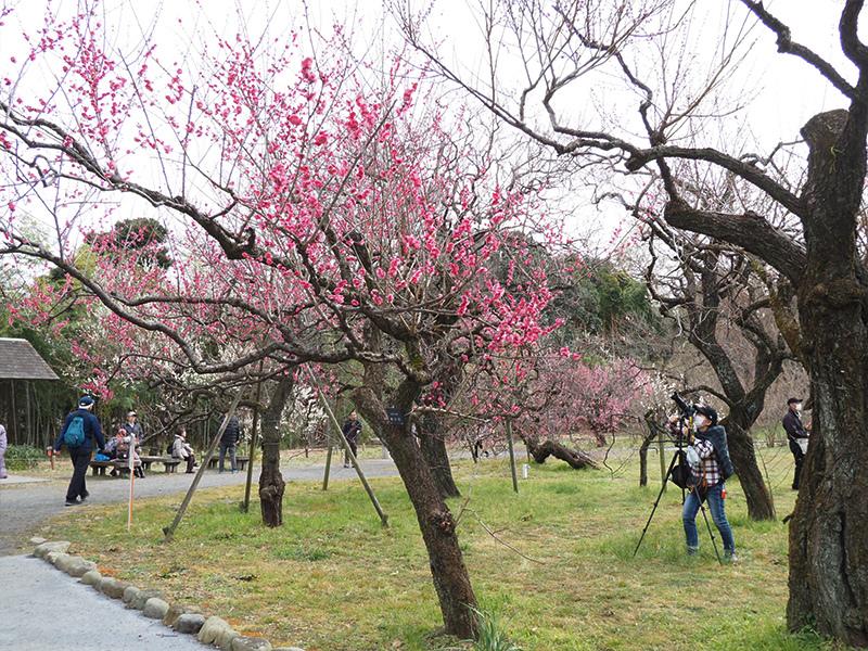 Hello from Tokyo 118 神代植物公園_a0003650_21543153.jpg