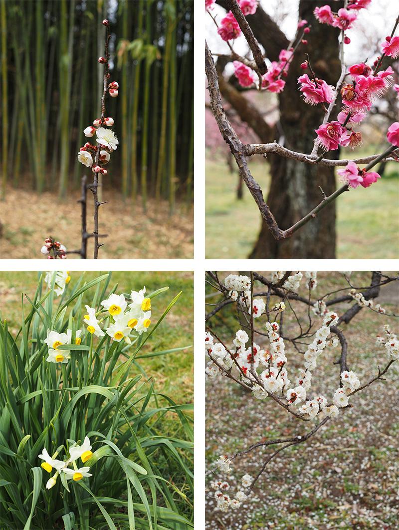 Hello from Tokyo 118 神代植物公園_a0003650_21575964.jpg