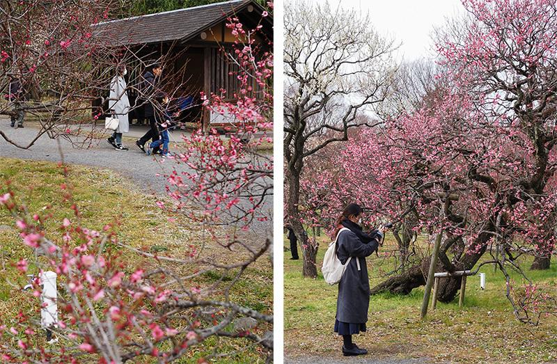 Hello from Tokyo 118 神代植物公園_a0003650_21582286.jpg