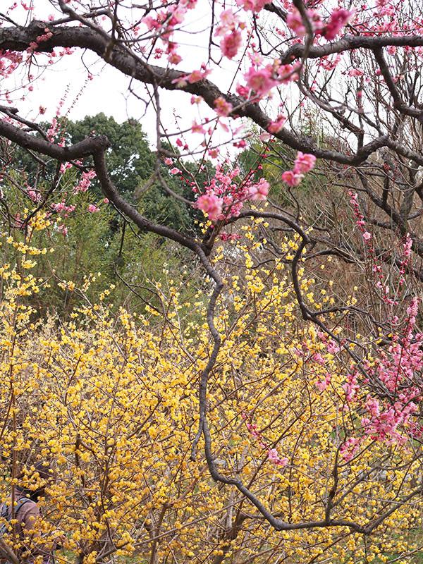 Hello from Tokyo 118 神代植物公園_a0003650_21593290.jpg