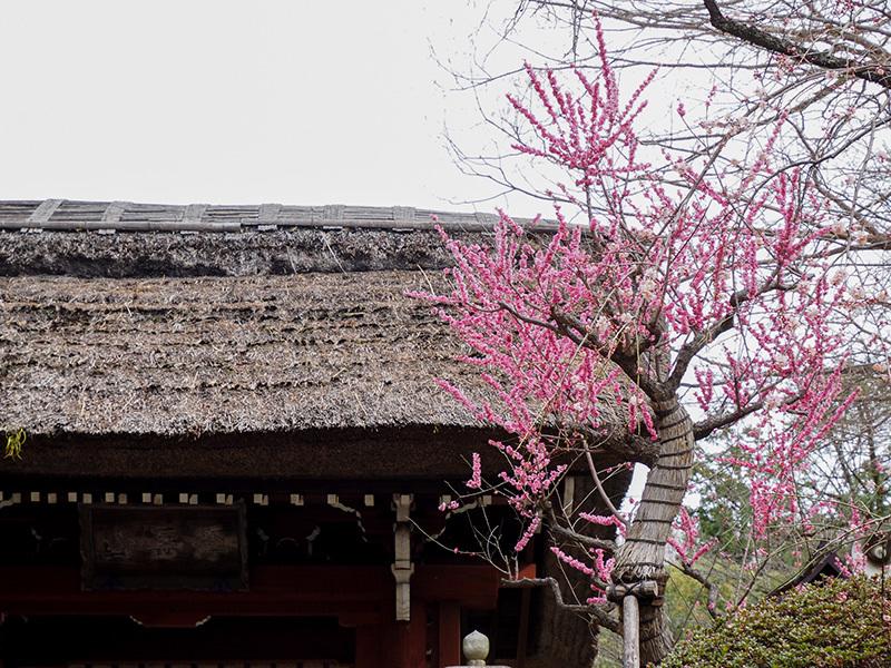 Hello from Tokyo 118 神代植物公園_a0003650_21595841.jpg
