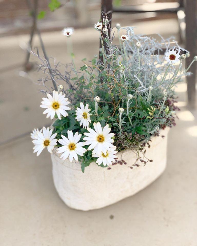 旬なお花を使った寄せ植え_f0220152_16250906.jpg