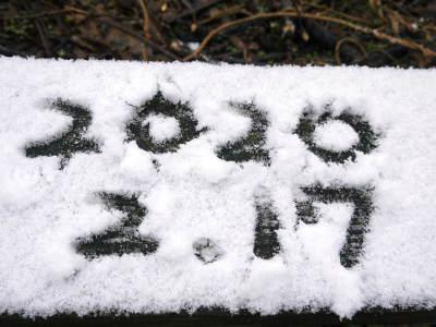 株式会社旬援隊の冬の様子 この冬、初の積雪(?)です!春の訪れが早いはずが…、果樹たちが心配です!_a0254656_15134417.jpg