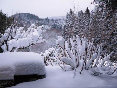 株式会社旬援隊の冬の様子 この冬、初の積雪(?)です!春の訪れが早いはずが…、果樹たちが心配です!_a0254656_16264541.jpg