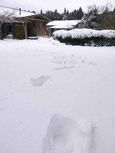 株式会社旬援隊の冬の様子 この冬、初の積雪(?)です!春の訪れが早いはずが…、果樹たちが心配です!_a0254656_16301654.jpg