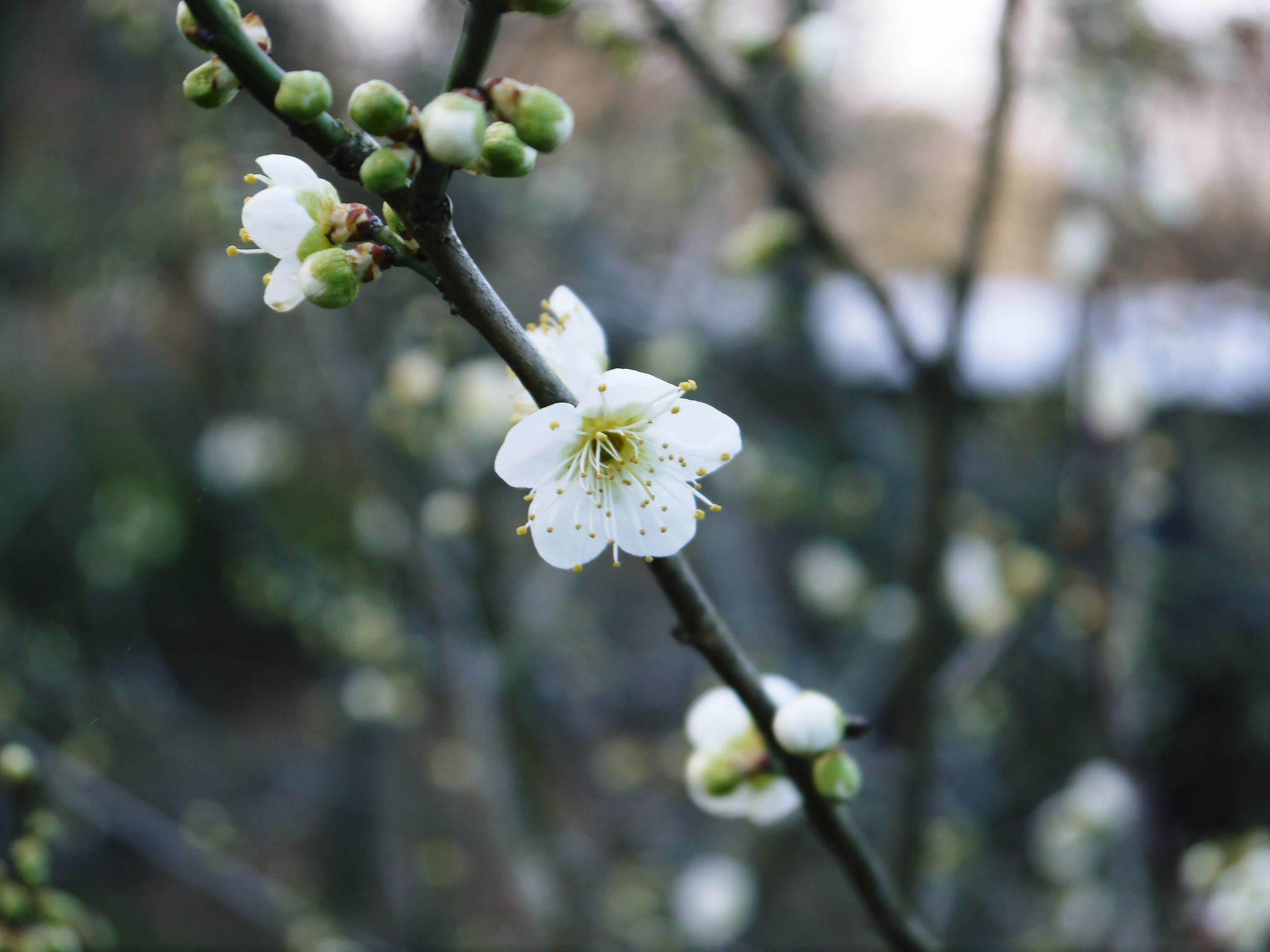 株式会社旬援隊の冬の様子 この冬、初の積雪(?)です!春の訪れが早いはずが…、果樹たちが心配です!_a0254656_16484187.jpg