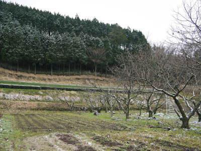 株式会社旬援隊の冬の様子 この冬、初の積雪(?)です!春の訪れが早いはずが…、果樹たちが心配です!_a0254656_17031432.jpg