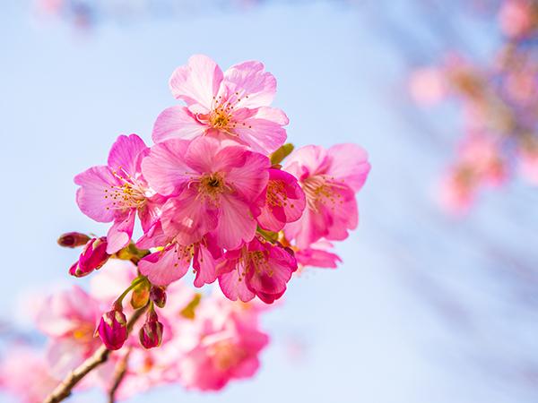 春ですね!_a0155464_09331150.jpg