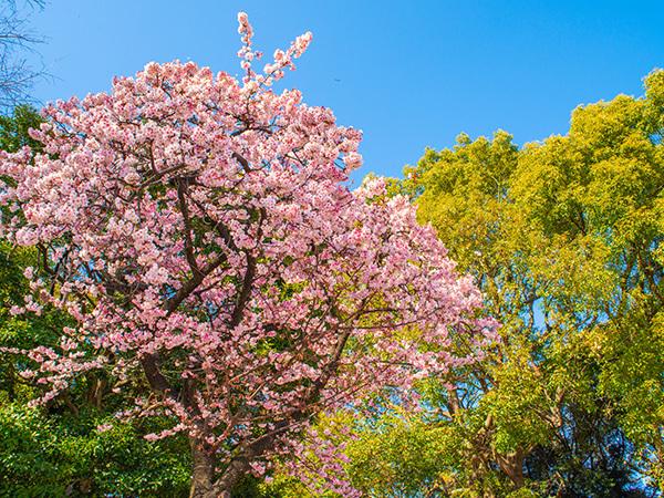 春ですね!_a0155464_09360488.jpg