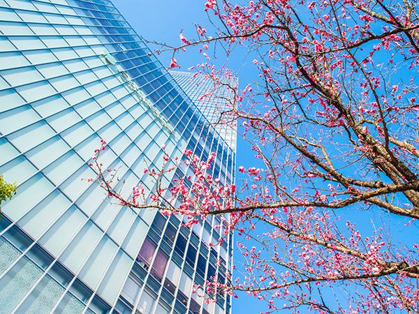 春ですね!_a0155464_09361277.jpg