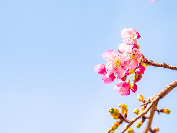 春ですね!_a0155464_09362247.jpg