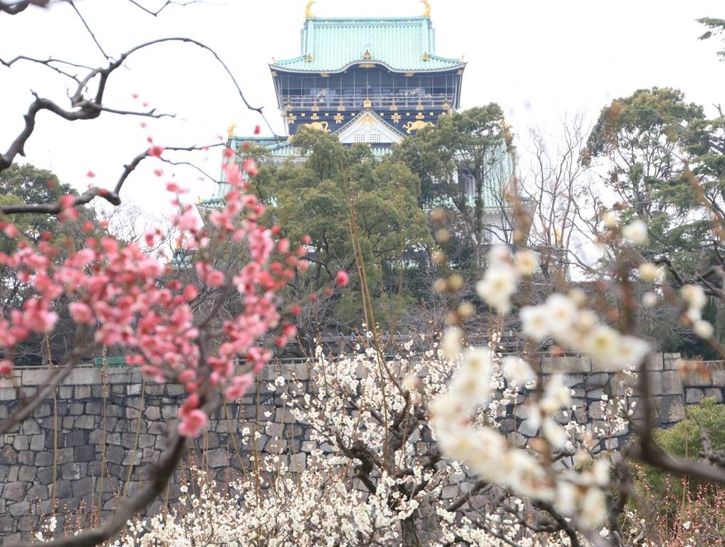 大阪城公園まで梅林を見る旅_d0202264_9123536.jpg