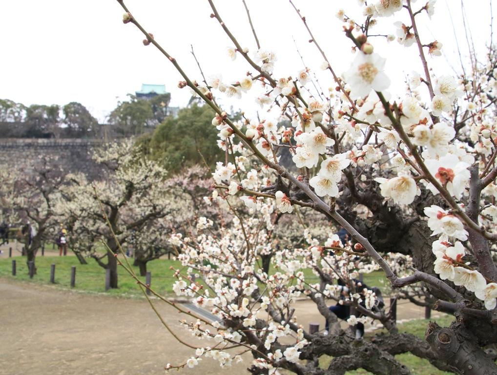 大阪城公園まで梅林を見る旅_d0202264_912759.jpg