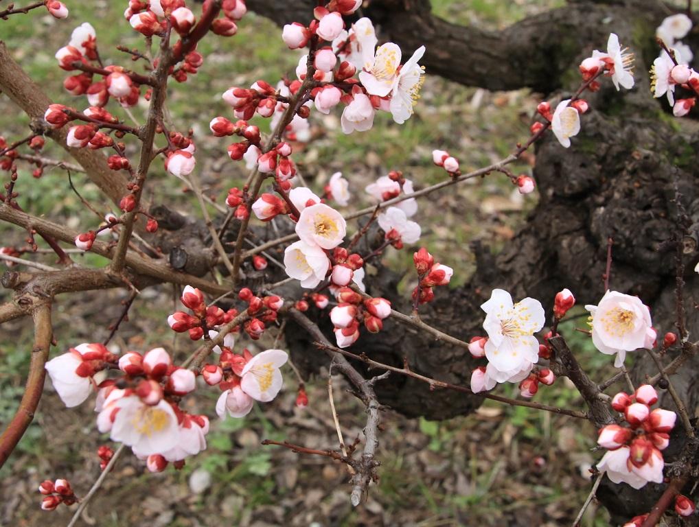 大阪城公園まで梅林を見る旅_d0202264_9143652.jpg