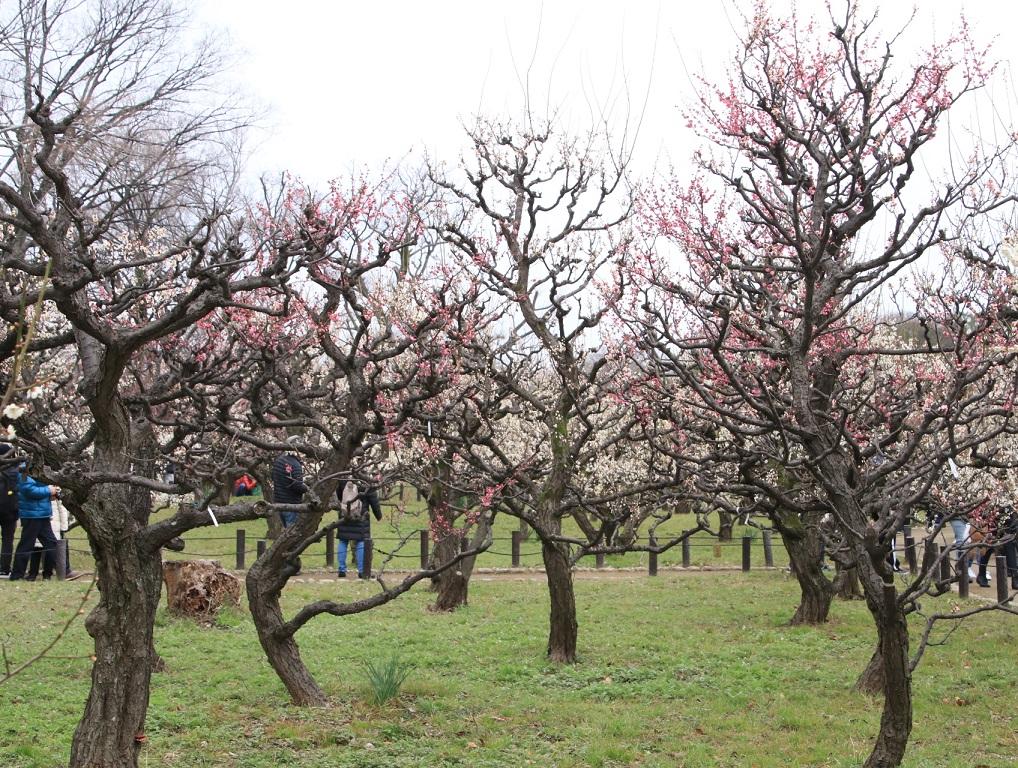 大阪城公園まで梅林を見る旅_d0202264_972035.jpg