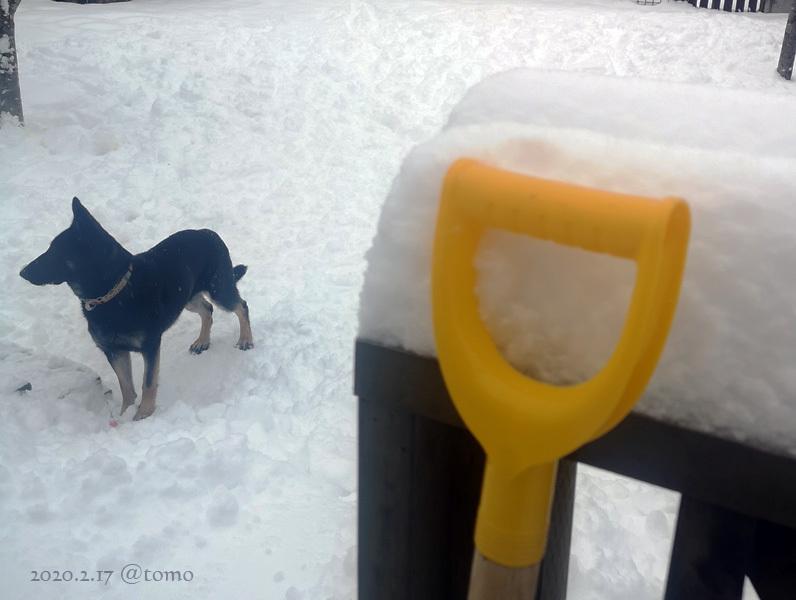 どかん!…と雪が_f0067179_22101529.jpg