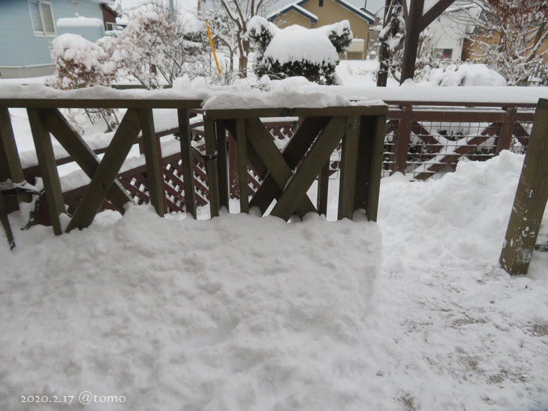 どかん!…と雪が_f0067179_22102576.jpg