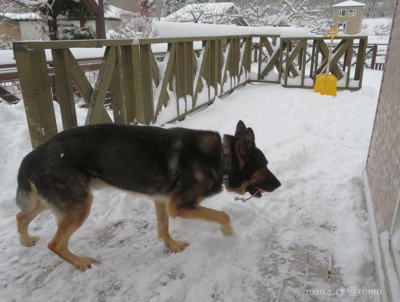 どかん!…と雪が_f0067179_22103358.jpg