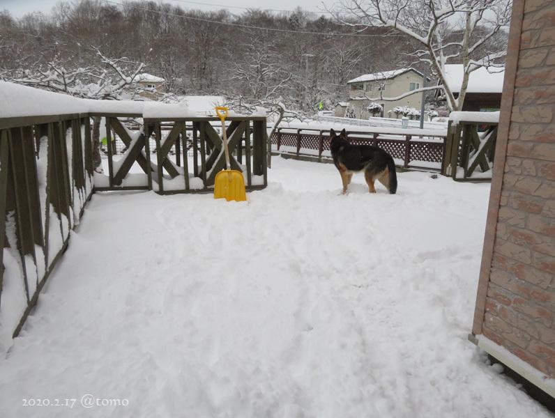 どかん!…と雪が_f0067179_22104181.jpg
